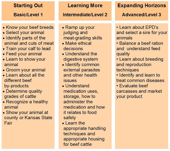 3 Levels of Learning table